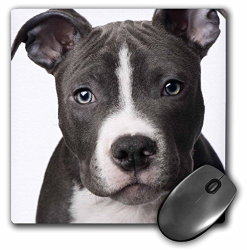 3dRose LLC 8 x 8 x 0.25 Inches Mouse Pad, American Pit Bull Terrier Puppy (mp_4240_1) 1