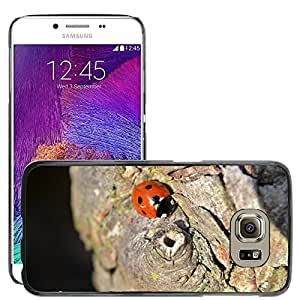 Hot Style Cell Phone PC Hard Case Cover // M00114267 Coleoptera Tree Red Black Ladybird // Samsung Galaxy S6 (Not Fits S6 EDGE)