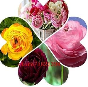 100 Seeds / Pack, Ranunculus Seeds Ranunculus Asiaticus Flowers Seeds Hot Home Garden Plant