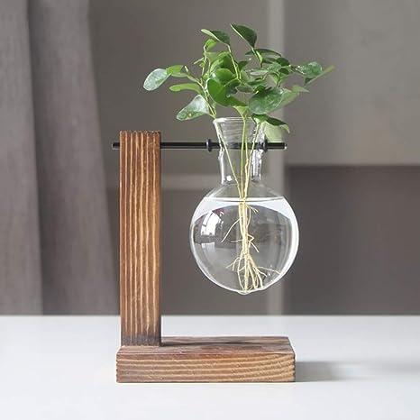 Bulbi In Vaso Di Vetro.Magiin Vetro Vaso Di Impianto Acqua Trasparente Terrario Di
