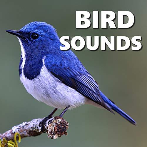 - Bird Sound