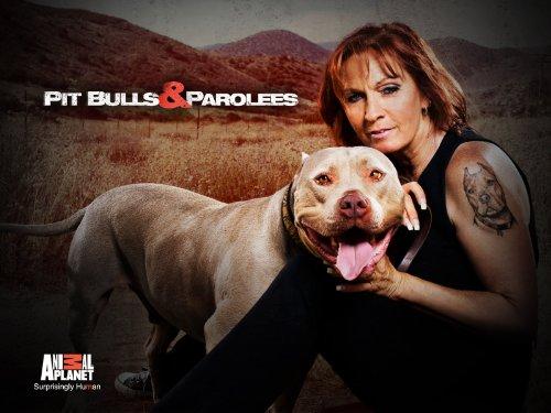 Amazon.com: Pitbulls and Parolees Season 3: Amazon Digital