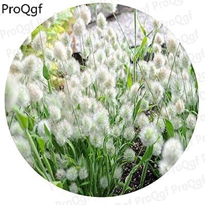 Fotcus - Prodgf 1000Pcs A Set white bunny tails grass random color pink pink cross shamrock grass iron gold - (Color: gold cross shamrock) : Garden & Outdoor