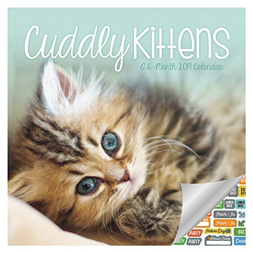 Cuddly Kittens Calendar 2019 Set - Deluxe 2019 Cuddly Kittens Wall Calendar with Over 100 Calendar Stickers (Cuddly Kittens Gifts, Office Supplies)