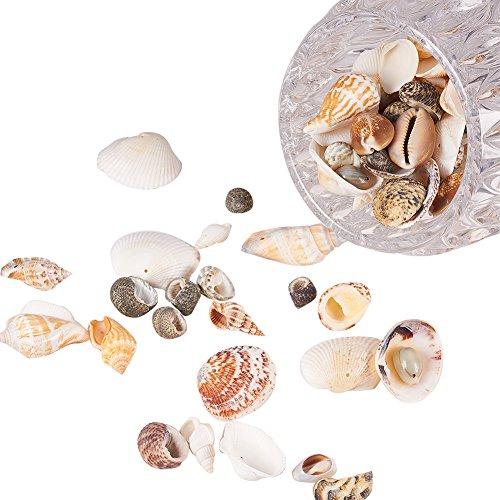 PH PandaHall Lot 500g Mixed Style Cowrie Cowry Seashells Oval Spiral Shells Holes Craft DIY