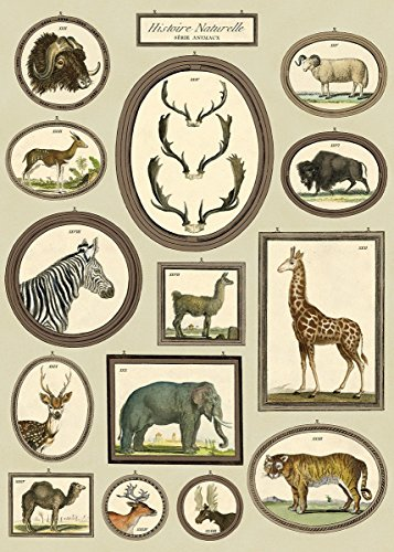 Cavallini & Co. Natural History Animals Decorative Paper Sheet 20
