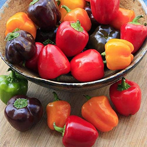 David's Garden Seeds Pepper Bell Mini Bell Blend 4644 (Multi) 50 Non-GMO, Open Pollinated, Heirloom Seeds