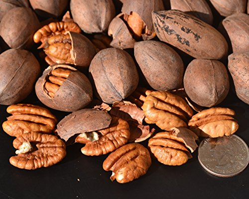 Inshell 12 oz Wild-harvested Texas Native Pecans-Fresh Direct Ship ()