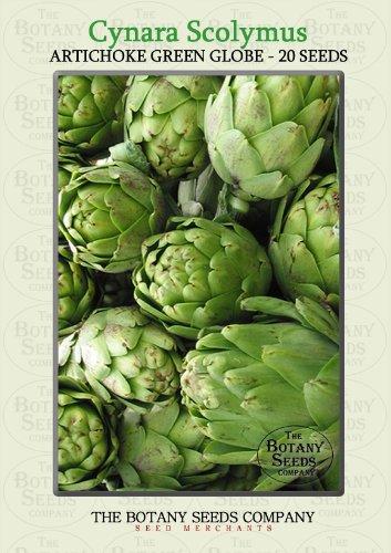 20seeds Green Globe Artichoke Cynara Scolymus Garden Vegetable - International Time Mail Delivery