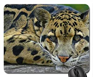 Beautifull wild cat Mouse Pad, Mousepad (Cats Mouse Pad)