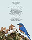 The Beloved and Charismatic Bluebird