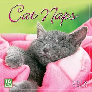Calendario 2018 gatos acurrucados - gatitos - gatitos ...