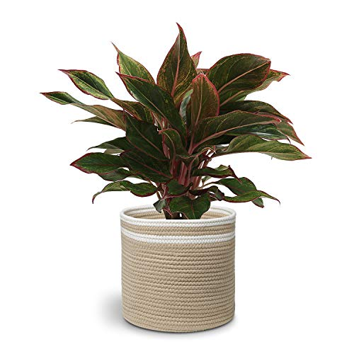 Cotton Rope Plant Basket, Woven Plant Basket, Storage Basket Organizer for Plants, Storage and Modern Home Decor, 11 x 11