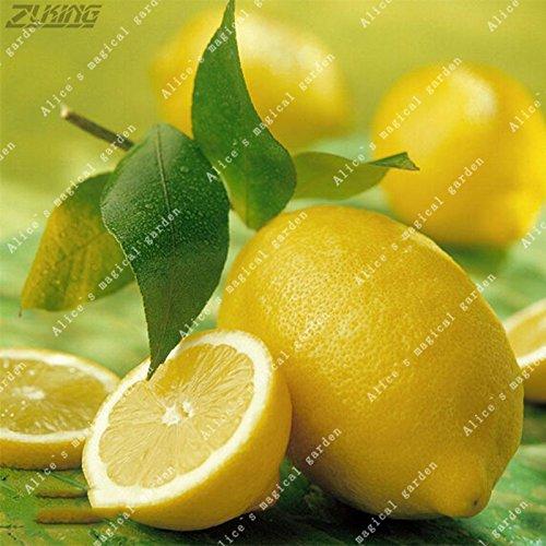 20 Pcs Lemon Seeds Fresh Juicing Edible Healthy Exotic Ornamental Tropical Fast Growing Fruit Tree Seed
