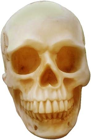VORCOOL Bucky cr/âne humain squelette Halloween grandeur nature les accessoires