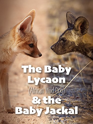 (The Baby Lycaon (African Wild Dog) & The Baby Jackal)