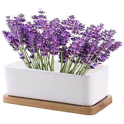 Closeout Grow Medicinal Herbs Indoors - Indoor Set Garden Seed Starter Assortment. Planting Kit Non GMO USDA Organic Lavender Seeds, Growing Pots, Soil. Beginners & Expert Gardeners - Herbal Tea Gfit : Garden & Outdoor