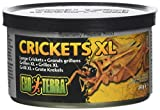 Exo Terra Reptiles Canned Food, Large Crickets, 1.2-Ounce