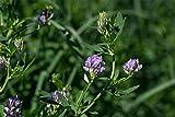 Alfalfa Seed (10 LBS)