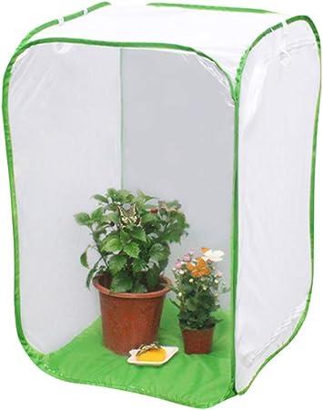 Zoloyo - Red de hábitat de mariposas, kit original para hábitat Life Science Education Butterfly Jaula plegable para insectos y mariposas jardín, Large: Amazon.es: Hogar