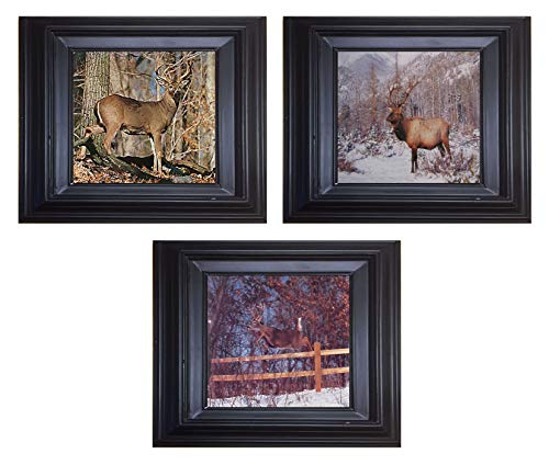 Whitetail Buck Deer and Bull Elk Antler Wildlife Animal Three Set 8x10 Black Framed Wall Decor Art Print Posters
