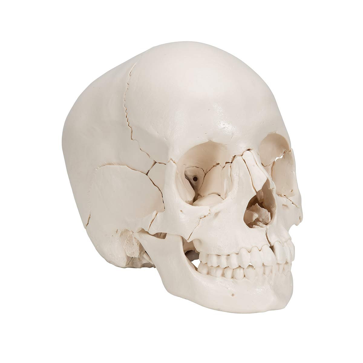 3B Scientific Skull Kit