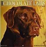 Just Chocolate Labs 2019 Wall Calendar