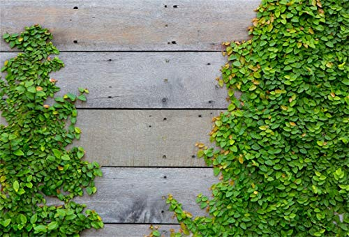 CSFOTO 6x4ft Background for Ivy on Wood Wall Photography Backdrop Creepers on Rustic Wood Wall Green Leaves on Vintage Wood Child Kid Baby Artistic Portrait Photo Studio Props Polyester Wallpaper (Wallpaper Vine Botanical)