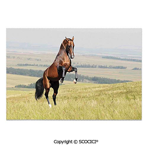 SCOCICI Set of 6 Printed Dinner Placemats Washable Fabric Placemats Bay Akhal Teke Horse Stallion Rearing on The Field Noble Mammal Outdoors Pastoral for Dining Room Kitchen Table Decoration