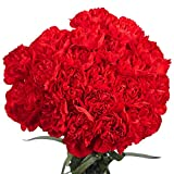 GlobalRose 100 Red Carnations - Beautiful Flowers For Delivery-...