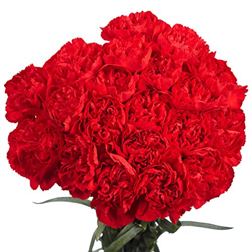 GlobalRose 100 Fresh Cut Red Carnations - Fresh Flowers For Birthdays, Weddings or Anniversary.