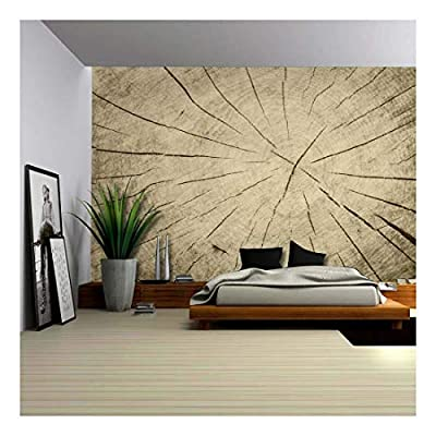 Up Close of The Inner Workings of a Cut Tree - Wall Mural, Removable Sticker, Home Decor - 66x96 inches