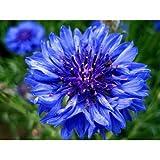 Multicolor flower seeds - Wildflower 100 Seeds