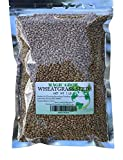 Magic Grow Wheatgrass - Rex Products Wheatgrass Seed 1lb. Non-GMO - Guaranteed to Grow