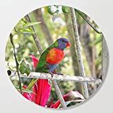 Society6 Wooden Cutting Board, Round, Rainbow Lorikeet sat on a metal structure by hereswendy