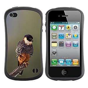 Paccase / Suave TPU GEL Caso Carcasa de Protección Funda para - baby bird spring nature blurry branch - Apple Iphone 4 / 4S