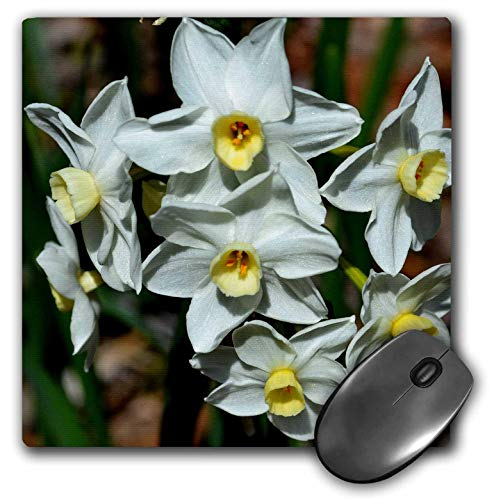 3dRose WhiteOak Photography Daffodils - The first bouquet of daffodils in 2013 - MousePad (mp_110101_1)