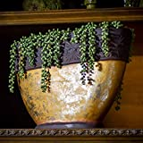 Seeko Artificial Succulents - 3 Pack - Hanging