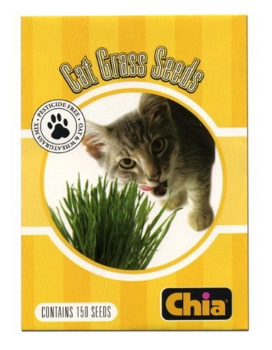 Chia Cat Grass Seeds 6 Count - Grass Chia Pet