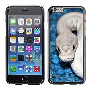 Paccase / SLIM PC / Aliminium Casa Carcasa Funda Case Cover para - Snake Blue White Cobra White Venom - Apple Iphone 6