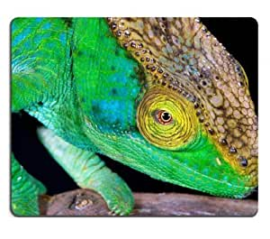 Chameleon lizard Macro garden reptile Mouse Pads Customized Made to Order Support Ready 9 7/8 Inch (250mm) X 7 7/8 Inch (200mm) X 1/16 Inch (2mm) High Quality Eco Friendly Cloth with Neoprene Rubber Liil Mouse Pad Desktop Mousepad Laptop Mousepads Comfortable Computer Mouse Mat Cute Gaming Mouse pad