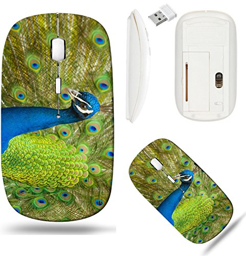 Liili Wireless Mouse White Base Travel 2.4G Wireless Mice with USB Receiver, Click with 1000 DPI for notebook, pc, laptop, computer, mac book ID: 28727558 Peacock displaying his fine feathers (Feathers Displaying Peacock)