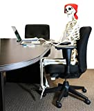 5 ft Pose-N-Stay Life Size Skeleton Full Body