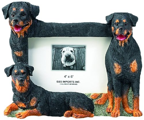 rottweiler pictures - 2