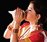 Nobility Blowing Shankh - Conch Shell - Special