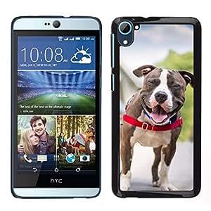 // PHONE CASE GIFT // Duro Estuche protector PC Cáscara Plástico Carcasa Funda Hard Protective Case for HTC Desire D826 / Boston Terrier French Bulldog Dog Pet /