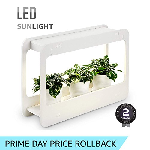 Grow Light Herb Garden in Florida - 1