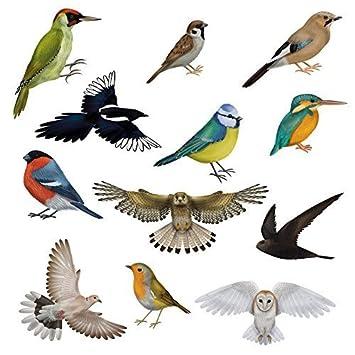 Brilliant Bird Window Clings By Articlings Different Birds - Bird window stickers amazon