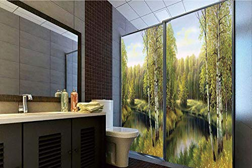 Birch Nursery River - Decorative Privacy Window Film, 35.43