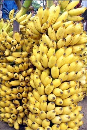 Cotowin Asien 10+ Fresh Musa Acuminata Edible Dwarf Banana Tree Plant Seeds Tropical Fruit